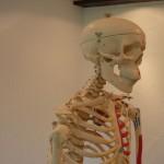 Schulterschmerzen – Impingement Syndrom